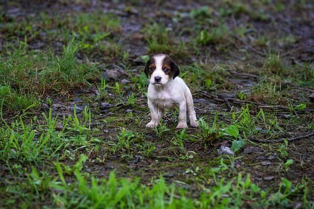 Tierschutz Was machen wenn man ein ausgesetztes Tier findet