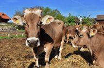 Tierschutz Gnadenhof Tiervermittlung