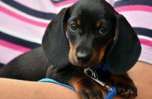 Tierschutz Hund Versicherung
