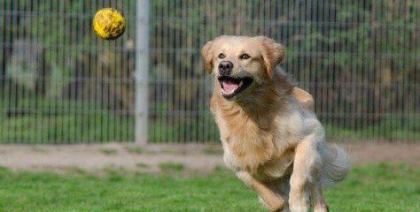 Wie kann ich mich ehrenamtlich für Tierschutz einsetzen und wie kann ich Tierheime in meiner Region unterstützen?